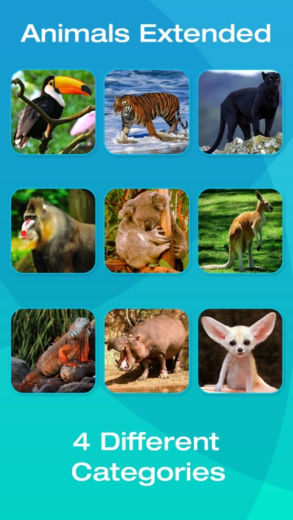 Safari and Jungle Animal Picture Flashcards for Babies, Toddlers or Preschool (Free) screenshot-3