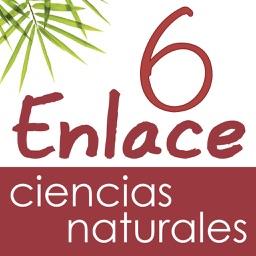 Vector Z   Enlace Ciencias Naturales 6