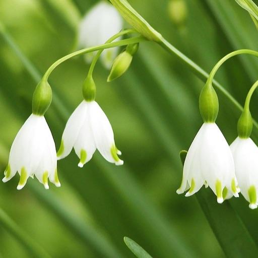 兰花大全-各种兰科植物