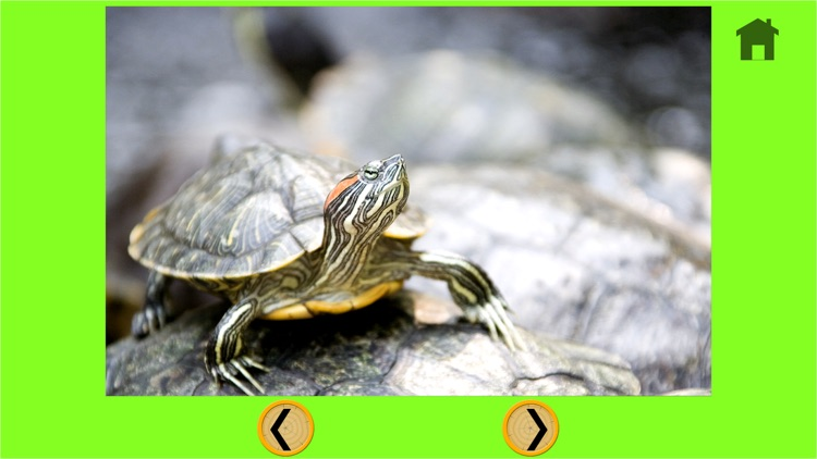 funny turtle for kids - free game screenshot-4