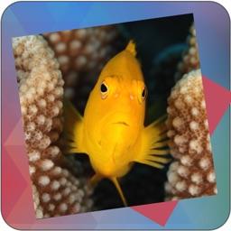 Déjà Vu - Reef