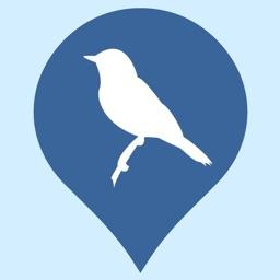 Regional Birds