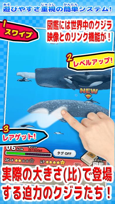 世界のクジラとイルカ図鑑