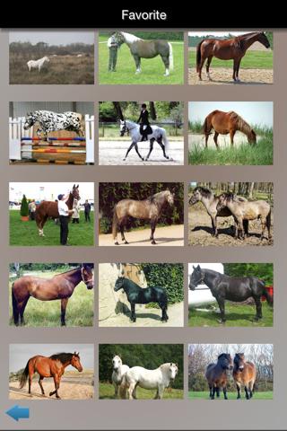 Best Horse Breeds screenshot 1
