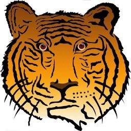 Embrace Tiger
