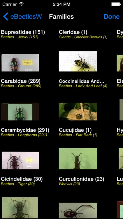 Beetles of the World - Coleoptera - A Beetle App
