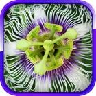 Las mejores plantas exóticas icon