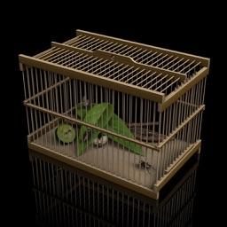 Insect Cage