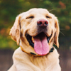 Dog Catalog HD - Photo Gallery & Wallpapers of Dog Breads FREE