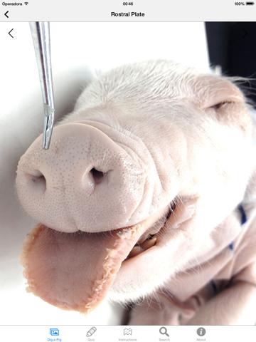Screenshot #6 pour Dig a Pig