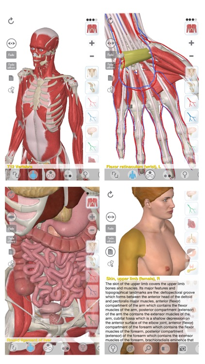 3D Organon Anatomy screenshot-0