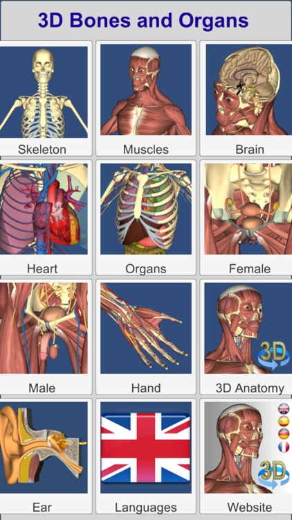 3D Bones and Organs (Anatomy)