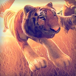 Tiger World | Free Tigers Simulator Racing Game For Kids