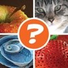 4 Pics 1 Word Puzzle: What's That Word? - iPhoneアプリ