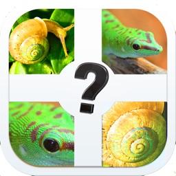 Zoomed Pic Quiz - Guess All The Animals In This Brand New Photo Trivia Game