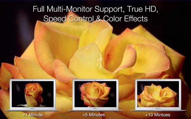 Blossom Clock Screensaver For Mac