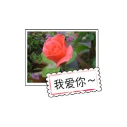 花的祝福贴纸,设计:wenpei
