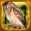 GPS動く野鳥図鑑400