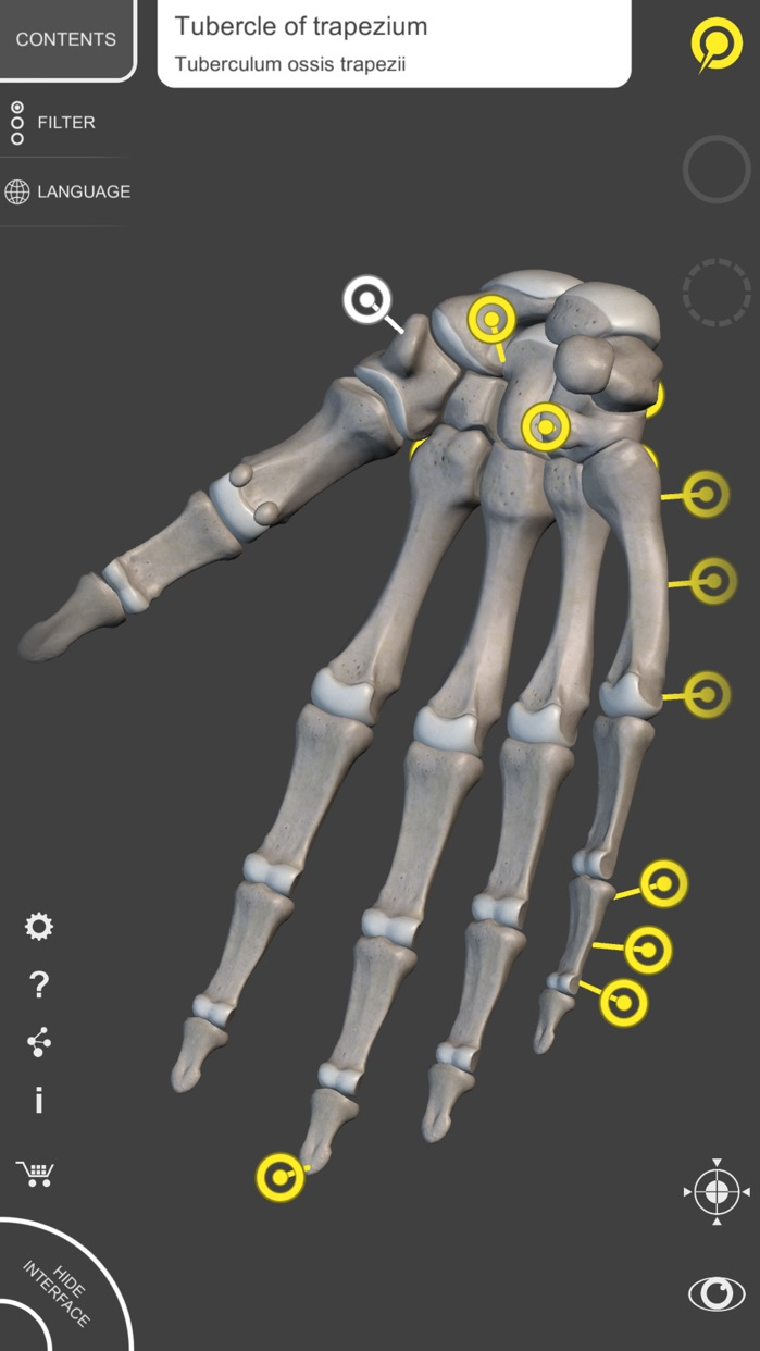 Skeleton - 3D Atlas of Anatomy Screenshot