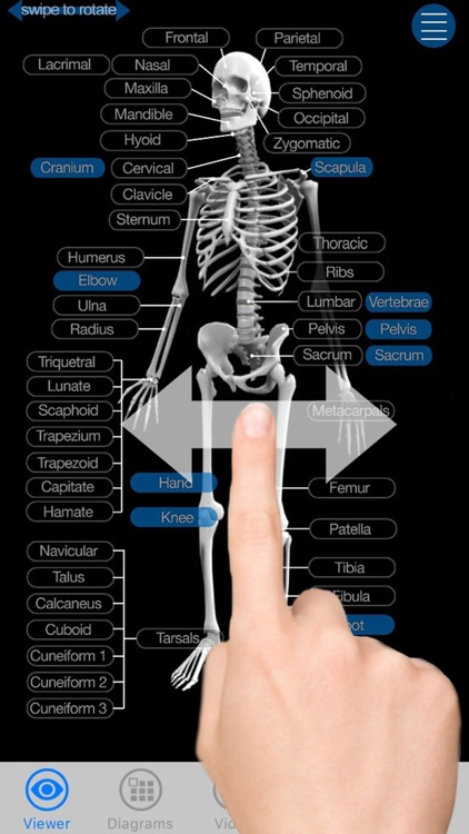 Skeletal Anatomy 3D - Quiz and Reference screenshot-4
