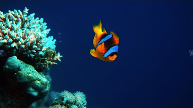 Diving In The Red Sea screenshot-3