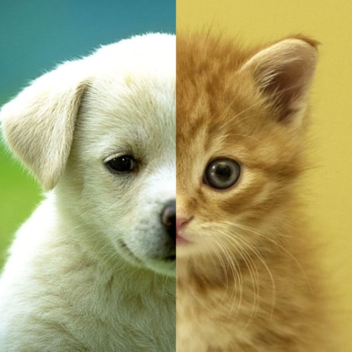 cats amp dogs wallpapers hd cute puppies amp kittens by