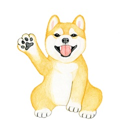 Shiba The Dog Animated Stickers