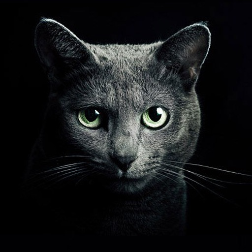Найди кота для iPad