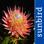 Wildblumen von Südafrika, Bestimmung von Blumen SA