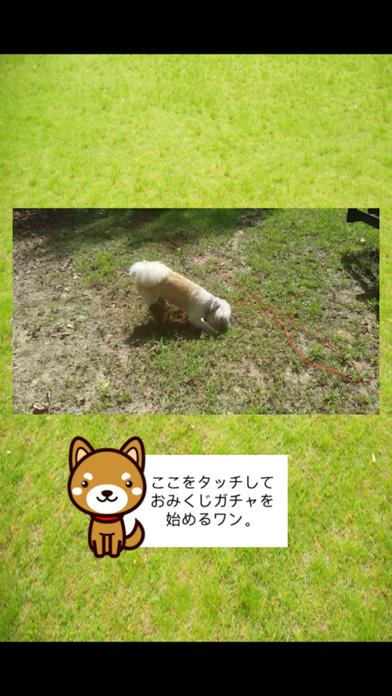みんなのわんこ天気〜天気予報+犬写真で毎日に少しほっこり〜のおすすめ画像4
