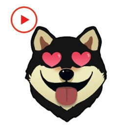 Shiba Emoticon Animated