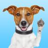 JackMoji - Stickers & Keyboard for Jack Russells