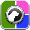 Pet Collage - Easy Layout Maker for Cute Puppies Ranking