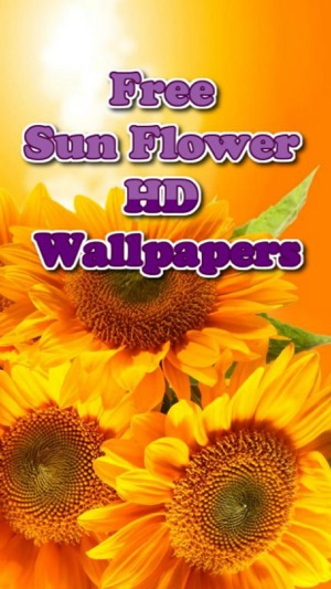Sunflower Wallpapers On The App Store