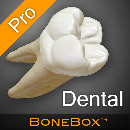 BoneBox™ - Dental Pro