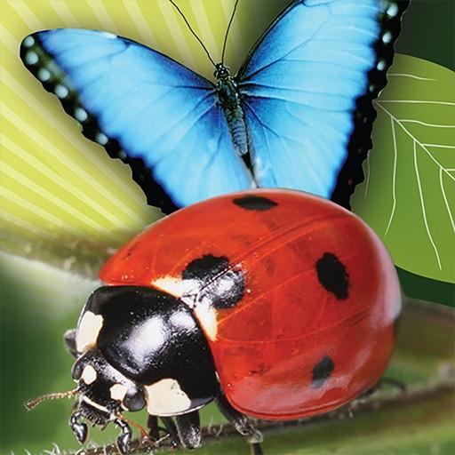 Popar Bugs