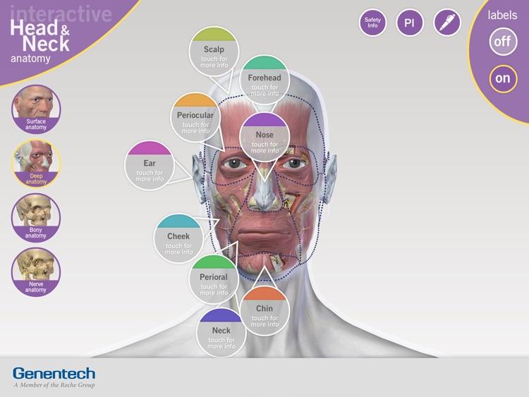 3D Facial Anatomy Tool screenshot-4