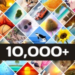 Hack 10000+ Wallpapers   FREE Backgrounds & Themes