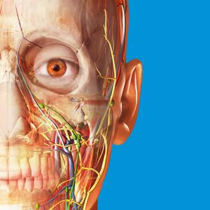 Human Anatomy Atlas 2017 - Complete 3D Human Body app