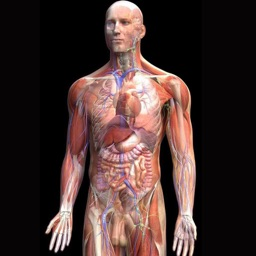 全套人体解剖