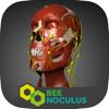 Anatomia da Cabeça - Medicina em Realidade Virtual