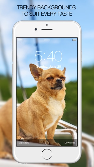 Dog Wallpapers Pictures Cute Dogs On The App Store