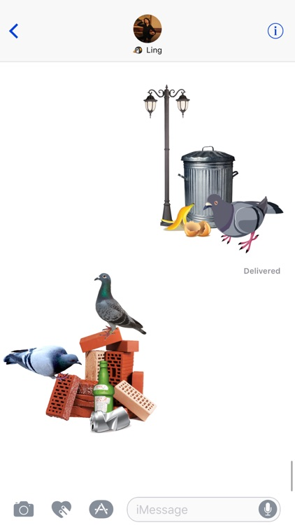 Trash Birds - Funny Realistic Pigeons screenshot-1