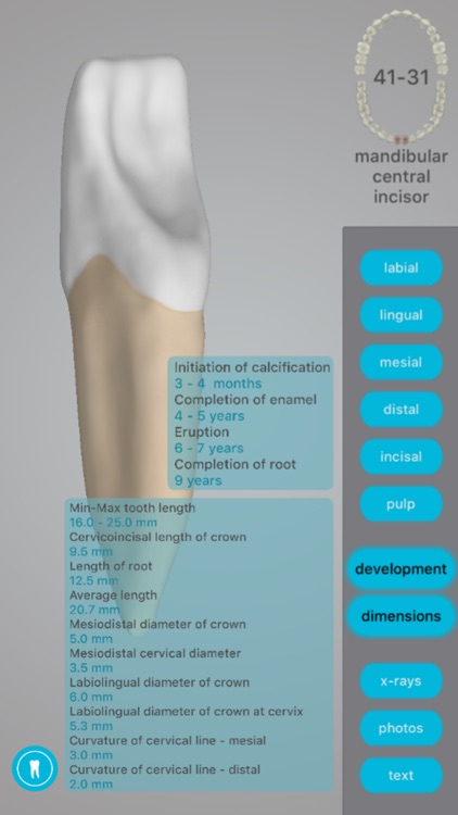 Dental Corpus Anatomy