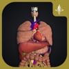 teamLabBody-Internal Organs-