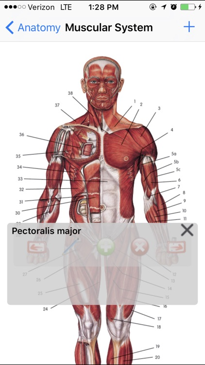Anatomy Lite screenshot-2