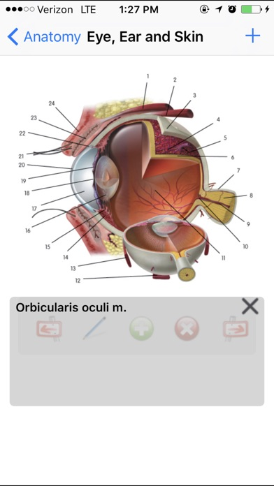 Screenshot for Anatomy Lite in Denmark App Store