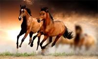 Beautiful horses on TV