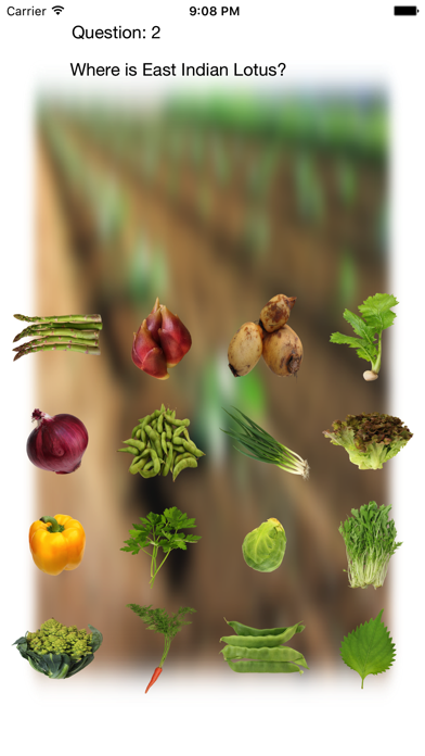 Vegetables Touch ~ simple trivia game ~ screenshot 3
