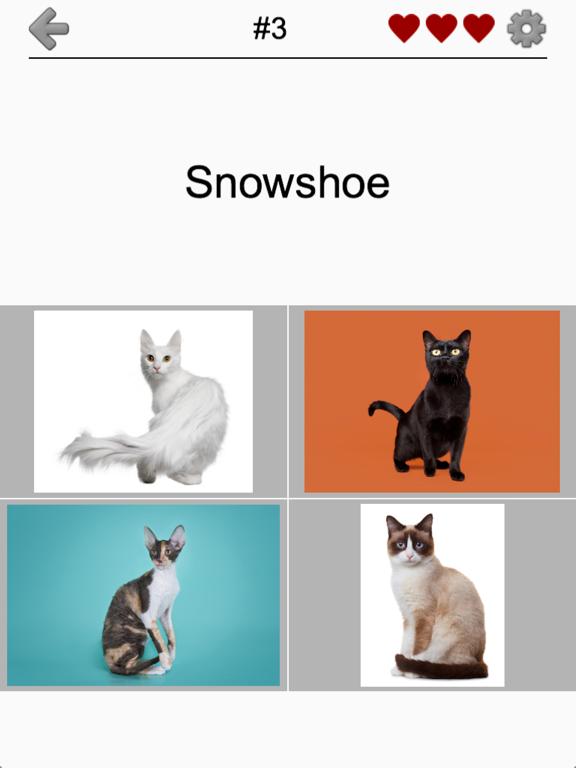 Cats Quiz - Guess Photos of All Popular Cat Breeds screenshot 7